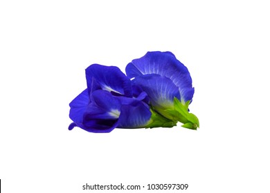 Pea flowers isolated on white background with clipping path