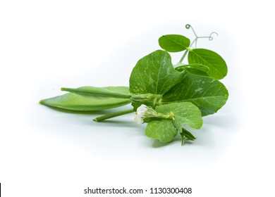 Pea pods with leaves and tendrils isolated on white background. Healthy and organic nutrition.