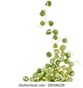 Pea seeds with sprouts close up macro shot top view isolated on a white background