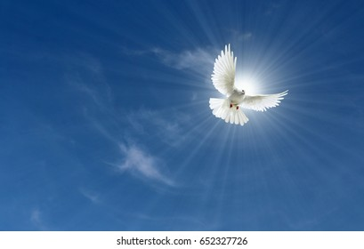 Peace Dove Sun and Clouds