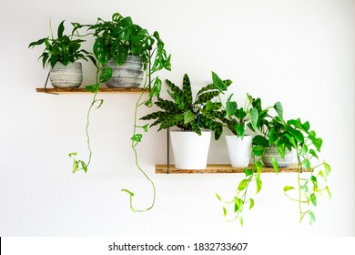Peace Lilies, Monstera, Calathea, Golden Pothos houseplants in gray and white ceramic flowerpots on wooden shelves hanging on a white wall. Houseplants for healthy indoor climate and interior design.