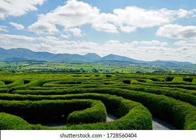 The Peace Maze in Castlewellan, Northern Ireland. Mourne Mountains in the background