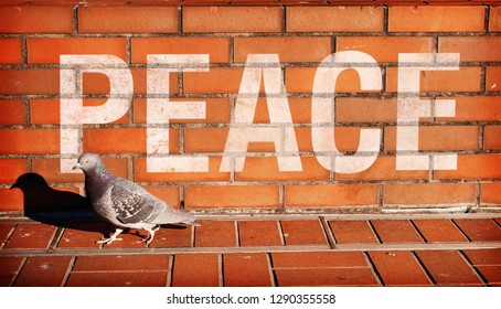 PEACE written on the pigeon and brick wall