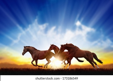 Peaceful background - running horses, beautiful sunset, picture for chinese year of horse 2014