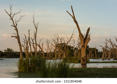 Peaceful Backwater setting on the River Murray South Australia, late evening nature background in landscape orientation. Colorful sky and clouds over ghost gums and reeds.