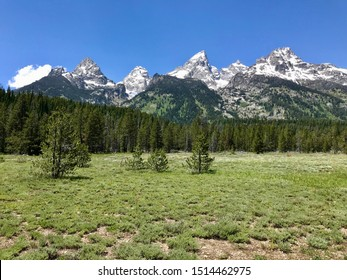 Peaceful and Beautiful Meadow in Grand Teton National Park, Wyoming