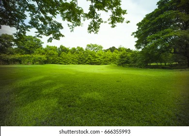 peaceful in a beautiful park and grass field