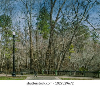 Peaceful bench and light post with trees in the background in Conway, South Carolina