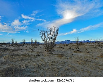 Peaceful Blue Skies of Dawn Framing Ocotillo Cactus in Anza Borrego Desert, December 2018