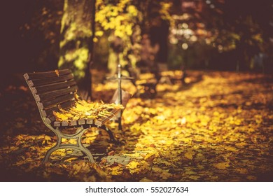 Peaceful Fall Foliage Park Bench. Bench Covered by Yellow Leaves.