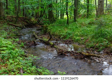 Peaceful forest stream flow down among stones in summer Bieszczady Region,Poland,Europe