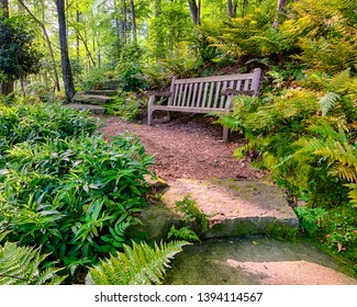 Peaceful hiking trail with bench