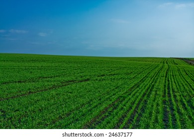 Peaceful landscape - natural green field with soft blue sky