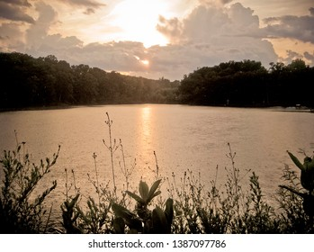 Peaceful Missouri Lake at Sunset with Plant Silhouettes in Summer