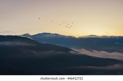 Peaceful nature before sunrise