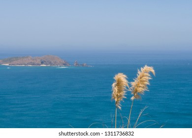 Peaceful nature with grass and blue ocean