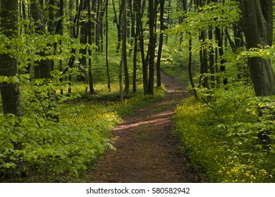 Peaceful path going through freshly green flowery forest in springtime.