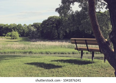 A peaceful photo of a bench in a park with a forest in the background.