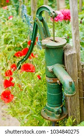 a peaceful picturesque rural landscape with red wild poppies and roses growing in the garden and old old-fashioned vintage copper hand water pump, a path going to the forest