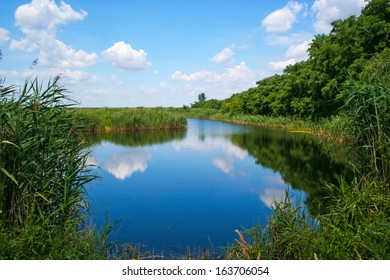 Peaceful pond with reed and clear blue water surface, and sky with clouds