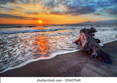 Peaceful and relaxing beach vacation destination sunrise with an intriguing piece of driftwood