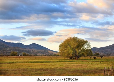 A peaceful rural scene in Utah, western United States, with a pasture, cows, tree and beautiful clouds.