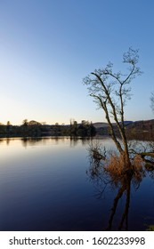 A peaceful scene of Birch Trees with Reeds on the side of Clunie Loch after the sun has set on Christmas Day.