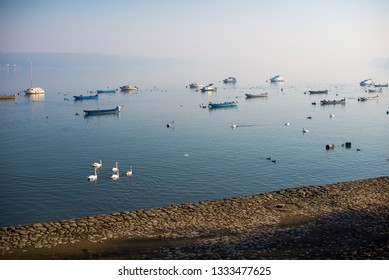 Peaceful scene of Danube river cost on peaceful misty morning with swans and boats in the water