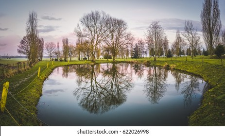 Peaceful scene. View of a pond of water with trees. Reflections in the water.