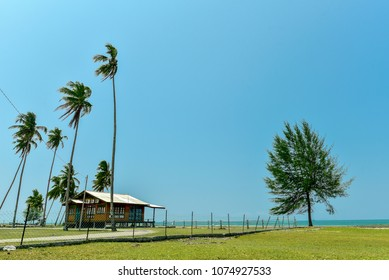 Peaceful scenery of coconut tree ,pine and small house with blue sky in Kampung Mangkok, Setiu, Terengganu, Malaysia.
