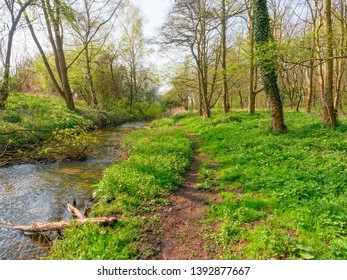 Peaceful spring morning on a woodland path beside a gently flowing small river.