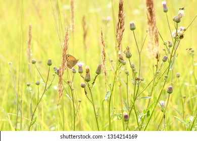 Peaceful summer landscape of the field with green grass and butterfly sitting on the grass in the sun