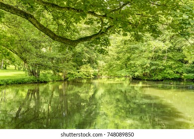 peaceful sunny park scenery with idyllic small lake at summer time