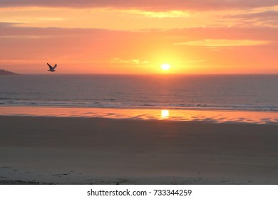 A peaceful sunrise on Old Orchard Beach, Maine, October 8, 2017. A gull is in flight and heading toward the center of the picture. Along with the orange, yellow and tan colors, this a stunning image.
