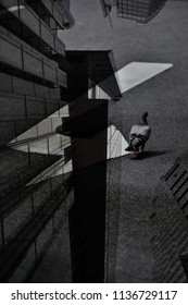 A peaceful superimposed or double exposure of black & white image of a Hong Kong pigeon walking on a white arrow direction street sign and a strong view of a skyscraper Hong Kong City scape.