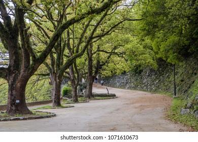 Peaceful tree tunnel walk path in japan
