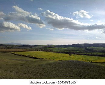 Peaceful Tuscan Agricultural Landscape. Countryside. Italy, Valdorcia, Chianti hills. Siena, Florence, The Amiata mountain. Green meadows, blue sky, a tree. small white clouds,