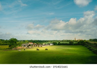 Peaceful view across rural English landscape with horses grazing in fields with hedgerow and ancient minster on horizon under blue sky near Beverley, Yorkshire, UK.