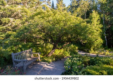 Peaceful view of a bench in the Metis gardens (Reford gardens), Canada