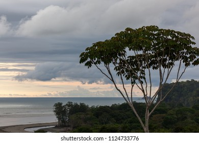peaceful view of the horizon stretching across the pacific ocean in Costa Rica as the sky begins to change into pastel colors and thick jungle along the shore.
