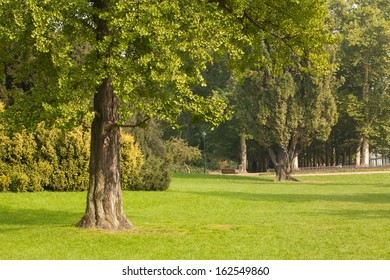 Peaceful view of trees and meadow