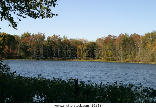 peaceful view of woods across a lake