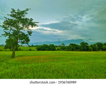 Peaceful village and rice fields atmosphere