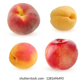 peach, apricot and nectarine isolated on white background. collection of single whole fruits.
