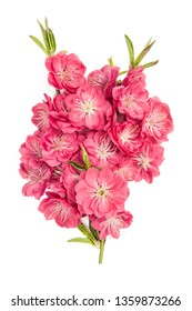 Peach blossom bouquet on white background. Pink spring flowers