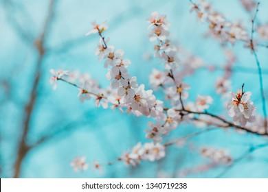 peach blossom springtime