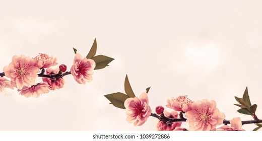 Peach Blossoms with space for your texts