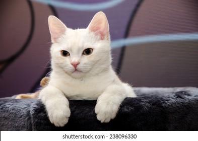 Peach cat