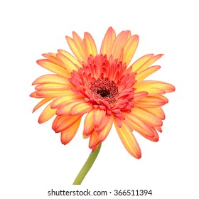 peach colored flowers images stock photos vectors shutterstock