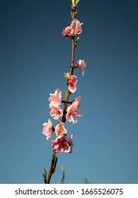 Fiori Japan.Fiori Japan Images Stock Photos Vectors Shutterstock
